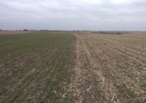 Cover Crop Test Plot 1