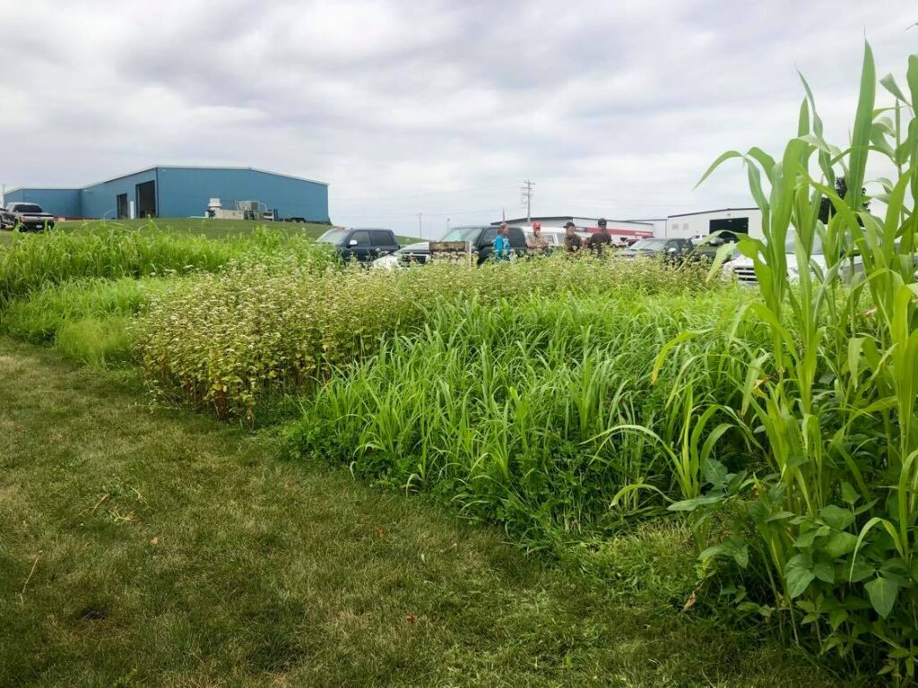 Cover crop test plots
